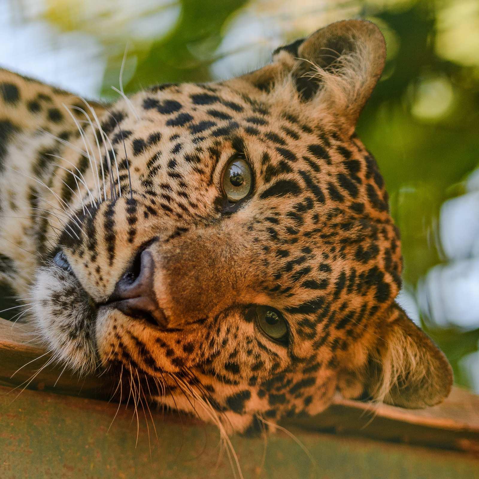Zoo des Trois Vallées